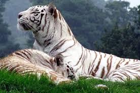snp1 Sundarban Safari and Royal Bengal Tiger