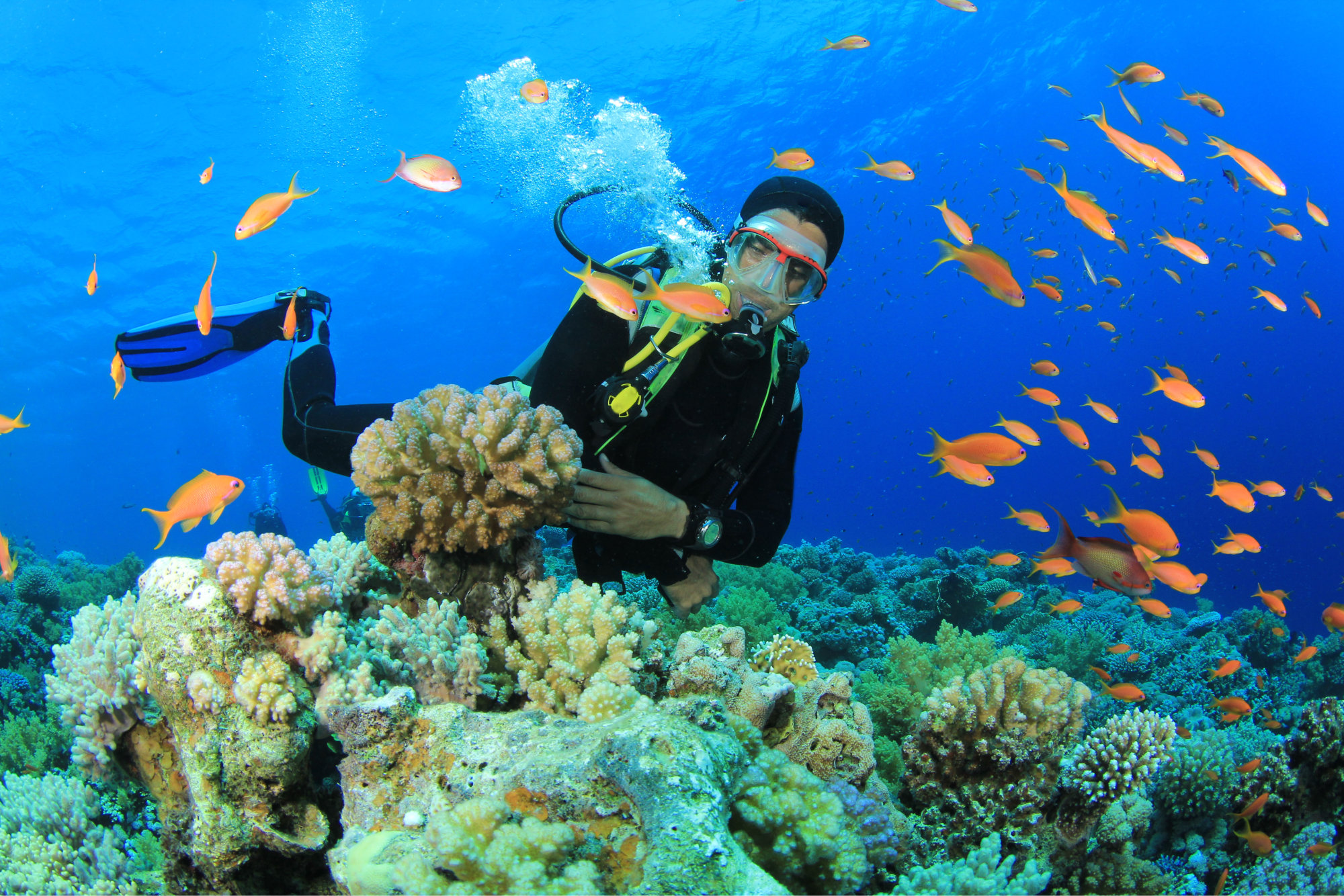 Scuba Diver swims through trop 8 Best Places to Visit in the Andaman and Nicobar Islands