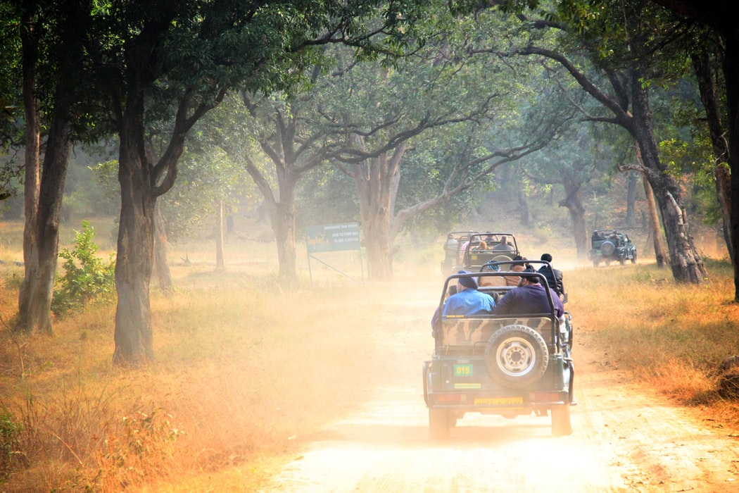 bandhavgarh 10 National Parks In India To Visit On Your Next Holiday