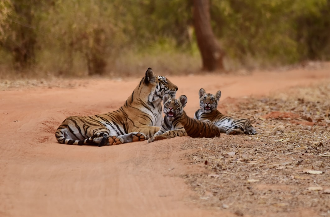 bandhavgarh1 Places to go after retirement