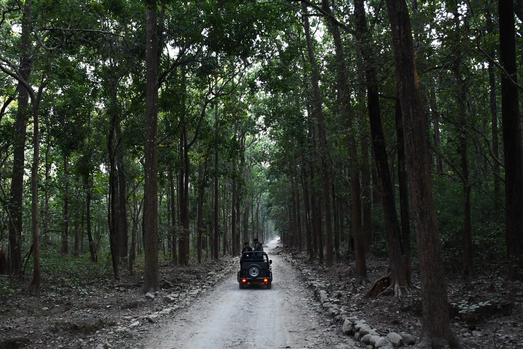 jim corbett 10 National Parks In India To Visit On Your Next Holiday