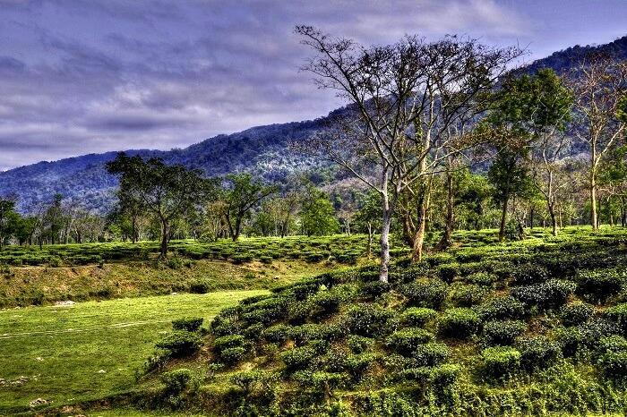 tea garden Best weekend destinations in India